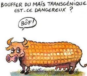 Dessin OGM