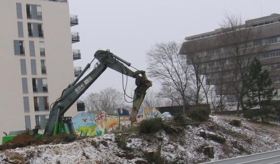 20100211 10h38 Démolition arbres et fresque IMG_0906